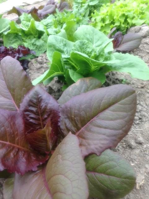 salat snart klar