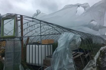 Stormen! (på 10. august)